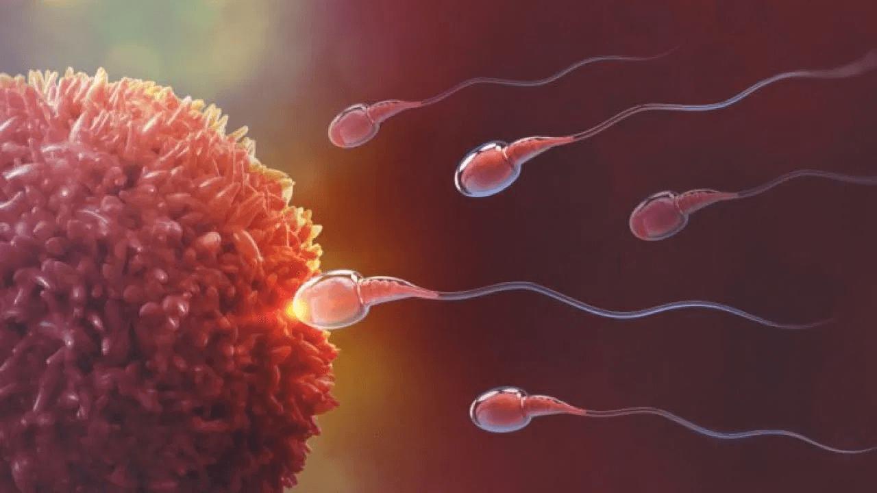 o que é fertilização in vitro (FIV)?